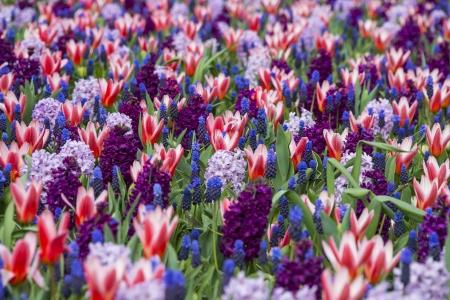 spring flower bed in the garden photo