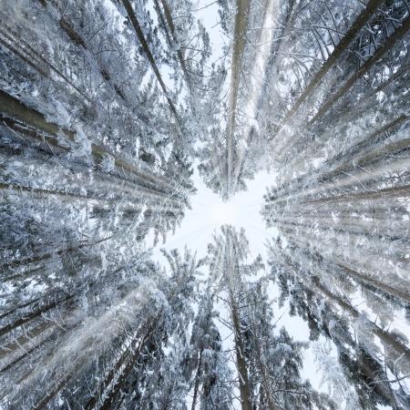 vinterskog Stockfoto