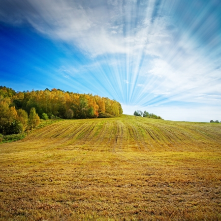podzimní krajina s loukou a lesem Reklamní fotografie