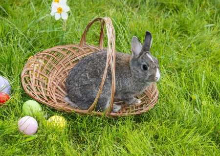easter rabbit and easter eggs in grass photo