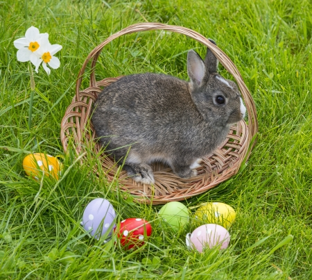 easter rabbit in a basket photo