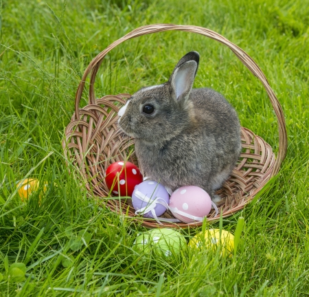 a cute easter rabbit in a basket photo