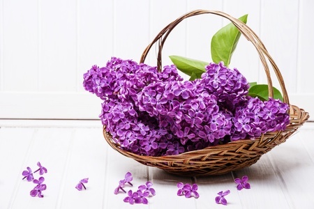 pink lilac in a basket on a white wooden background photo