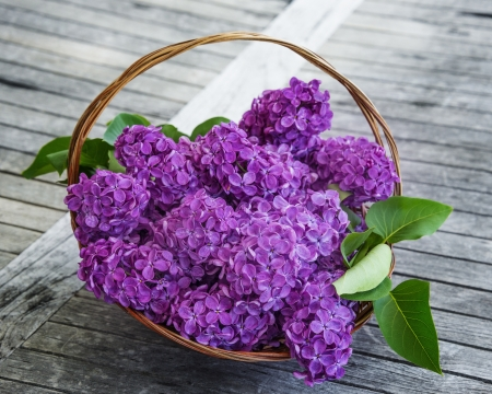 lilac in a basket on an old table photo