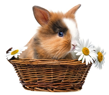 little rabbit in a basket with flowers photo
