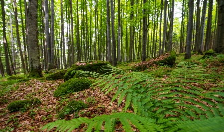 fern  large fern: spring forest Stock Photo