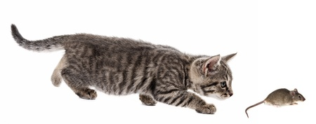 kitten and mouse isolated on a white background Stock Photo