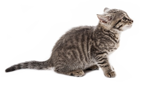 kitten isolated on a white background photo