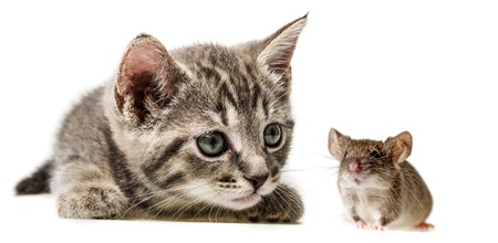 cute little kitten and mouse photo