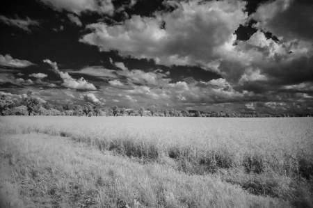 infra red: summer landscape with cloudy sky