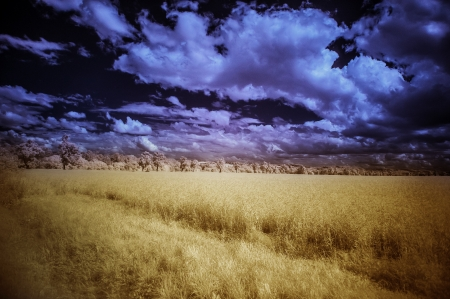 infra red: summer field and dramatic sky