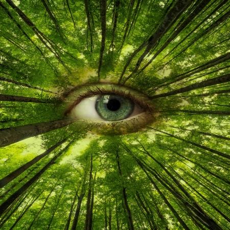 eye of forest - ecology concept Standard-Bild