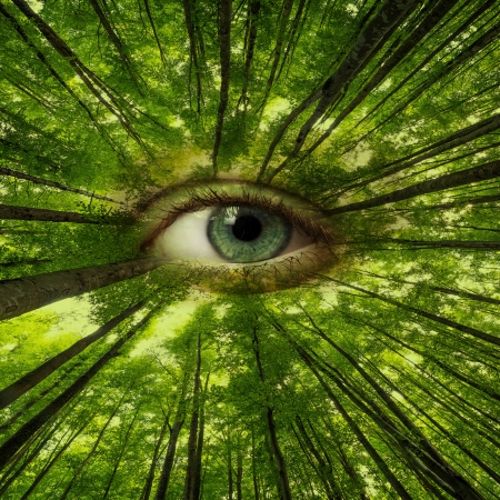 humanities: eye of forest - ecology concept Stock Photo