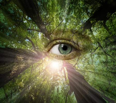 eye of forest - ecology concept Stok Fotoğraf