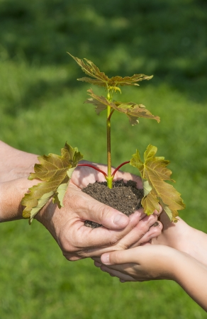 hands planting a little tree - an ecology concept photo