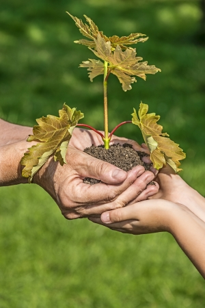 tree planting - hands with a little tree - ecology concept photo