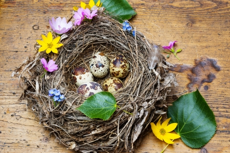 easter eggs in a nest photo