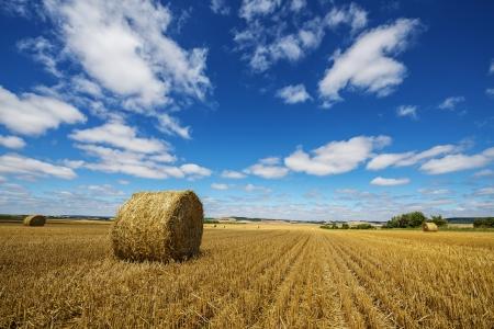 landscape afrer harvest photo