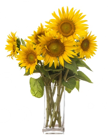 flower vase: a big bunch of sunflowers in a vase