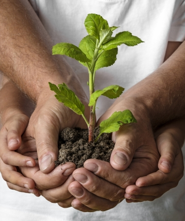 give: ecology concept - old and young hands and a little tree Stock Photo