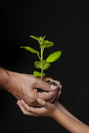 ecology concept - old and young hands holding a tree photo