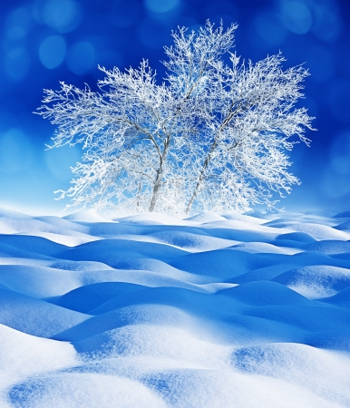 snow covered trees - winter landscape photo