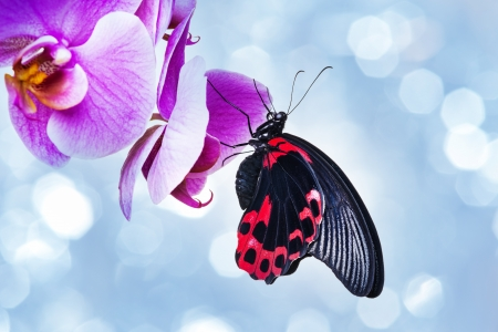 exotic butterfly sitting on an orchid  photo