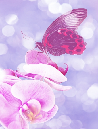 exotic butterfly sitting on an orchid blue background photo