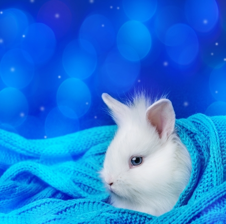 little cute white rabbit in a soft scarf - winter photo