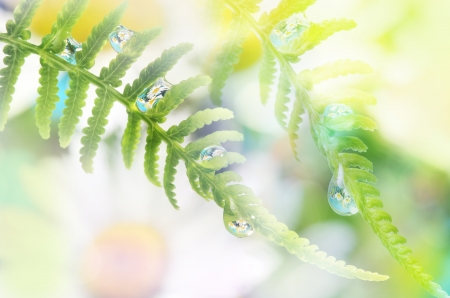 mirroring: fern with dew drops with mirroring efect inside