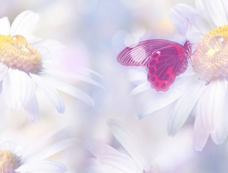 mirroring: daisies with a butterfly