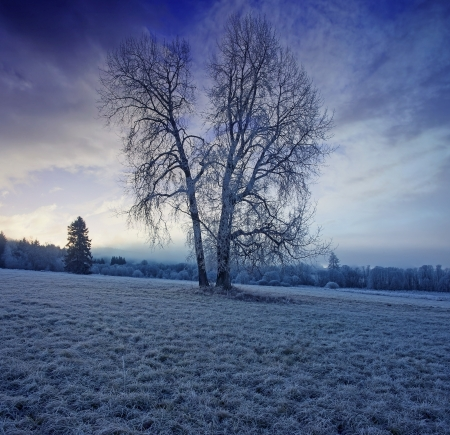 winter morning with a beautiful sunrise photo