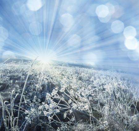 winter frozen plant and sunrise photo