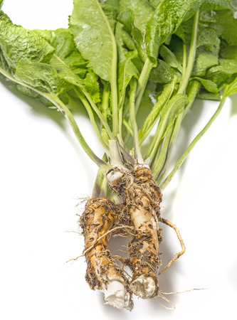 fresh horseradish from garden