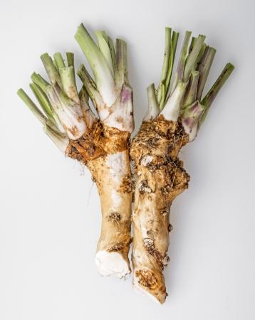horseradishs