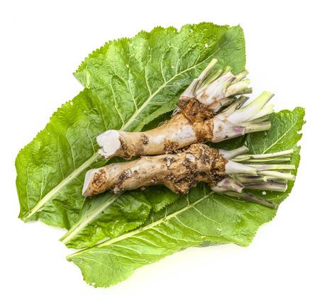 a fresh horseradish