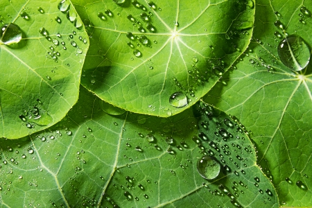 dewy: green dewy leaves