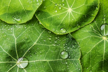 dewy: background from dewy leaves