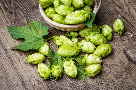 hop cones on a table photo