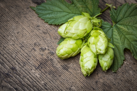 fresh green hop cones on a wooden table photo