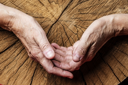 human skin texture: old elderly hands and old tree Stock Photo