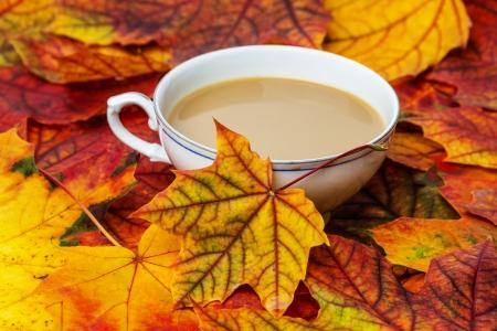autumnal tea Stock Photo
