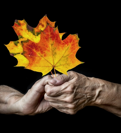 old hands holdin autumnal leaves on a black background photo