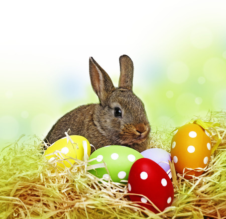 happy easter: little cute baby rabbit and painted easter eggs - white background