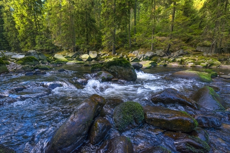 wild river and forest photo