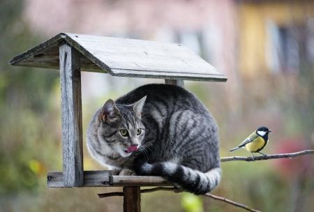 cat hunting a bird photo