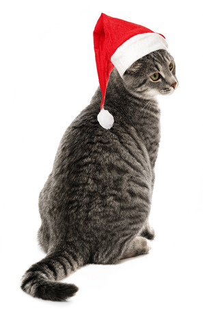 gato con un gorro de santa divertido photo