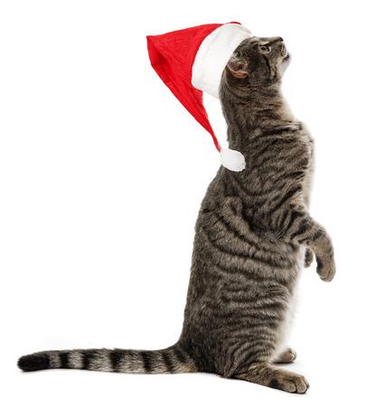 gato con un rojo divertido gorro de santa Foto de archivo - 23708259