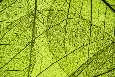 green leaf texture - in detail photo
