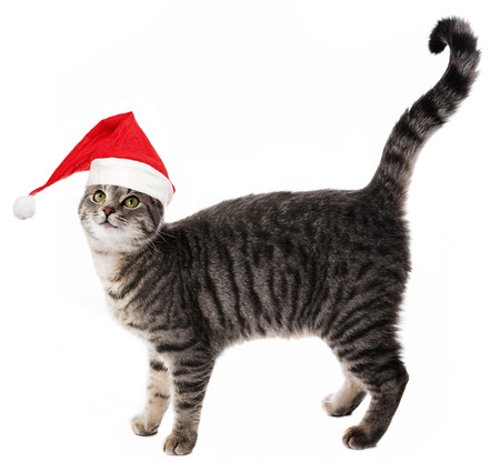 cat with a red santa cap photo